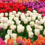 Оптовые базы цветов в Москве