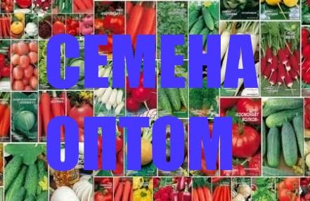 Семена оптом в Москве и области