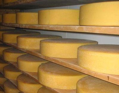 Сыр оптом в Москве
